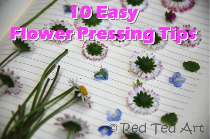 how-to-press-flowers