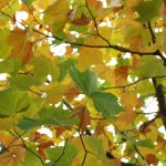 Weekly Photo: Why Autumn Makes Me Happy
