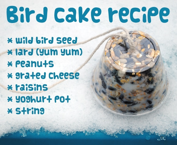 Simple Bird Cake Recipe - let's look after our feathered friends!