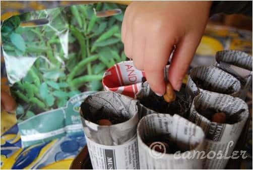 How To    Get Started on a Recycled Container Garden (Guest