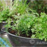sieve garden