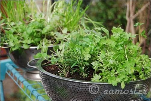 "Great container garden ideas to ""make"" at home. Click through for more thrifty and upcycled garden craft ideas."