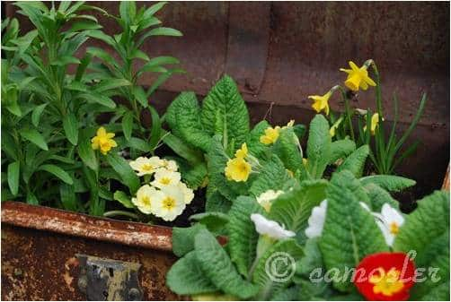 How to get started on a recycled container garden for Garden outlay ideas