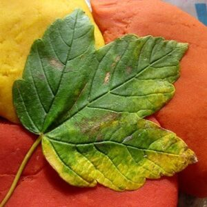 autumn crafts leaf prints