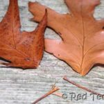 Kids Crafts: Leaf Crown