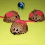 walnut mouse
