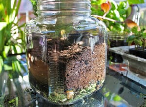 terrarium make
