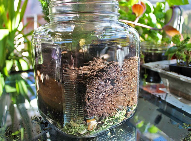 terrarium diy make
