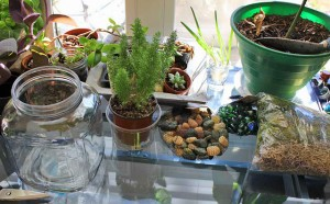 terrarium in a jar diy