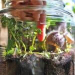 terrarium soil