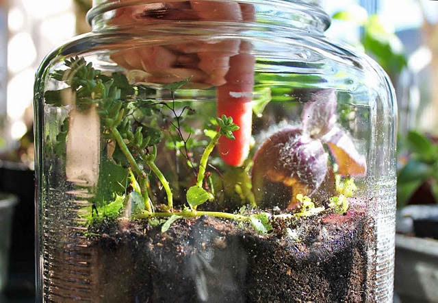 mini garden in a jar
