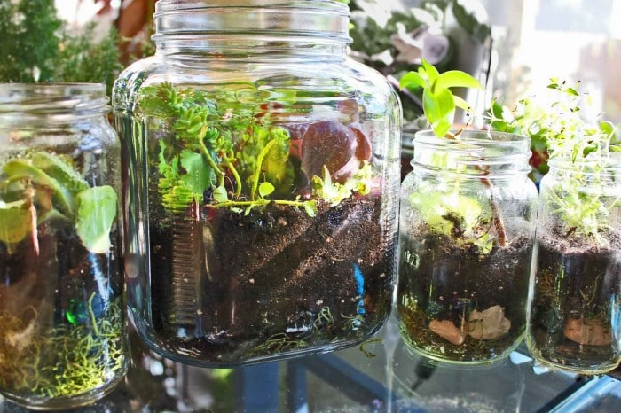 How to… Make Jar Terrarium