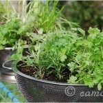 Spring crafts container garden