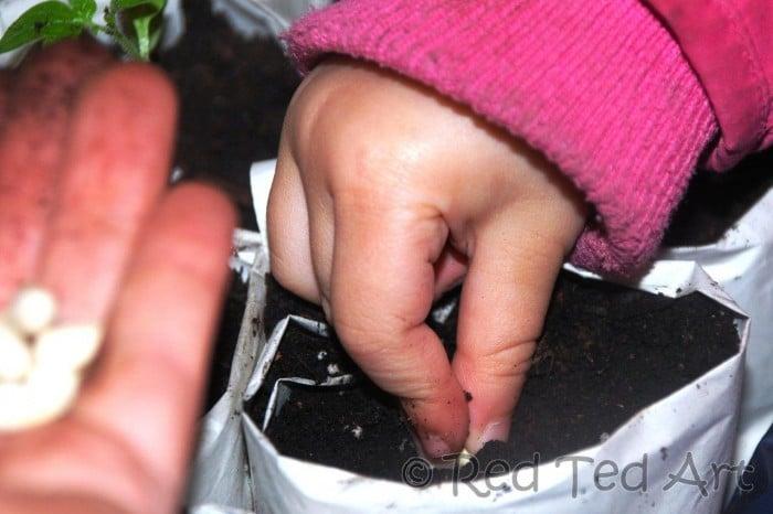 planting seeds kids