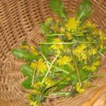 How to… Make Dandelion Soap