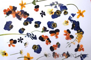 pressed flower crafts