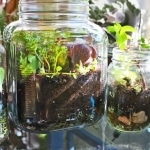 terrarium-tutorial-mini-garden