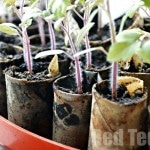 5 Thrifty Gardening Ideas