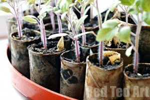 DIY Seedling pots