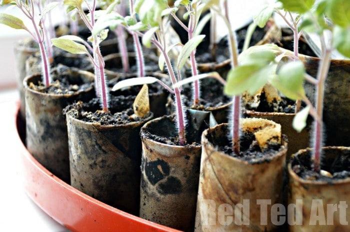 DIY Seedling pots