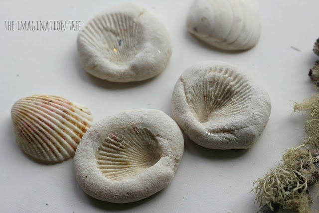 Shell-imprint-fossils