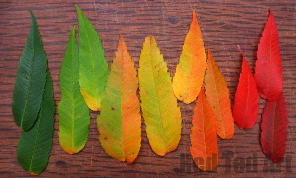 Autumn Craft Activities