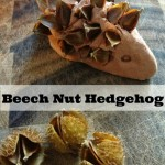 How to make a beech nut hedgehog