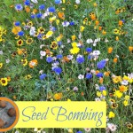 How to make Seed Bombs - Gifts Kids Can Make
