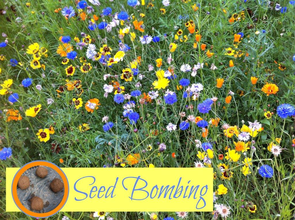 How to make Seed Bombs – Gifts Kids Can Make