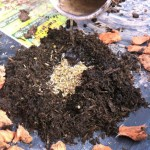 Seed Bomb How To
