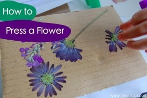 how-to-press-a-flower.019-600x400