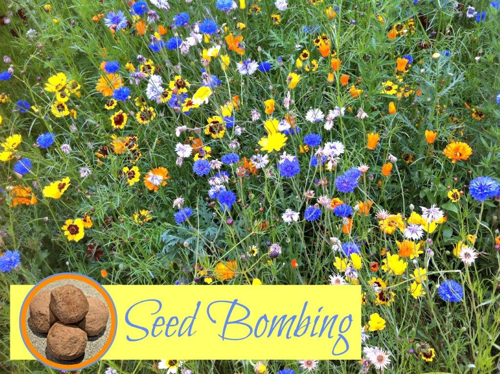 How to Make Seed Bombs – Recipe for Kids