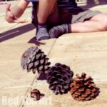 Nature Play Ideas: Pinecone Bowling