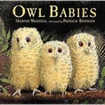 Owl Books for kids (4)