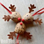 Walnut Reindeer Craft