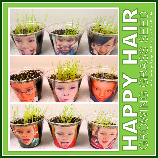Growing Grass Seed