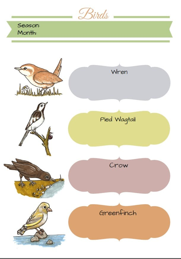 Bird Watching & Identification (FREE PRINTABLE)