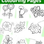10 Free Flower Colouring Pages