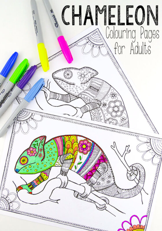 Colouring Pages For Grown Ups Chameleons Red Ted Art S