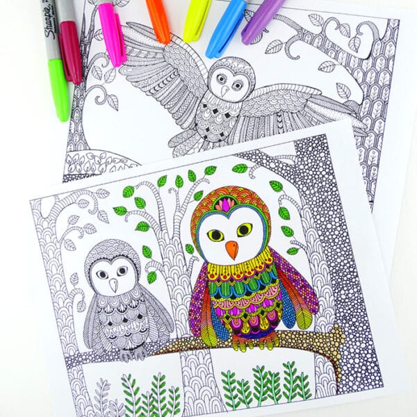 owl colouring pages for grown ups (2)