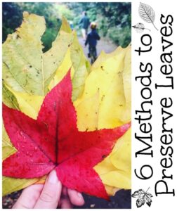 6 Methods to Preserve Leaves - but which is the best Which is the easiest and which is the cheapest