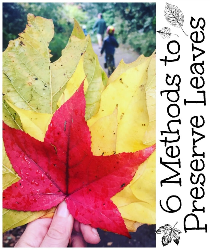 6 Methods to Preserve Leaves - but which is the best Which is the easiest and which is the cheapest #leaves #preserve #preserveleaves #leaf #fall #autumn