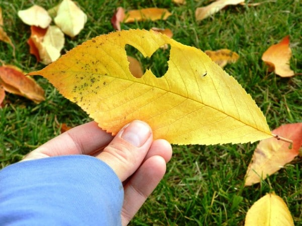 leaf crafts and ideas for fall - love this paper punch ideas, how sweet and fun!