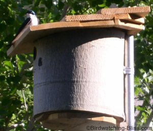 build-bird-house-plans-swallows