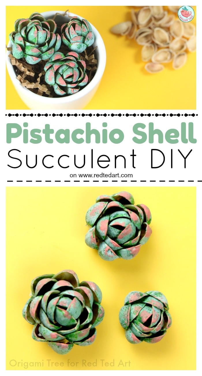 Pistachio Succulent DIY - Oh my, how adorable are these Pistachio Shell Succulents. How I love a thrifty upcycled DIY that is just too adorable for words. Learn how to make Pistachio Succulents today. #succulent #succulents #pistachio #pistachioshell #shells #diy