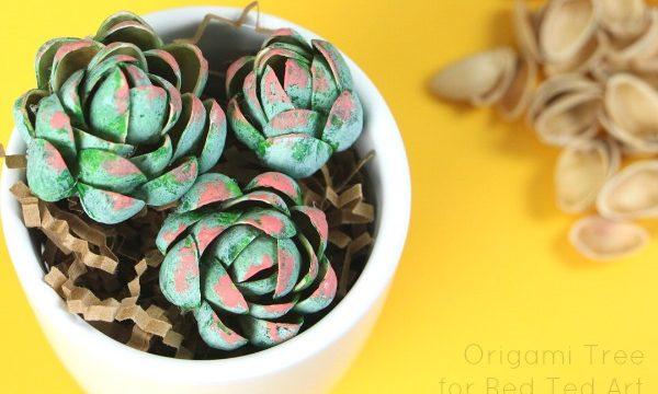 Pistachio Succulent DIY