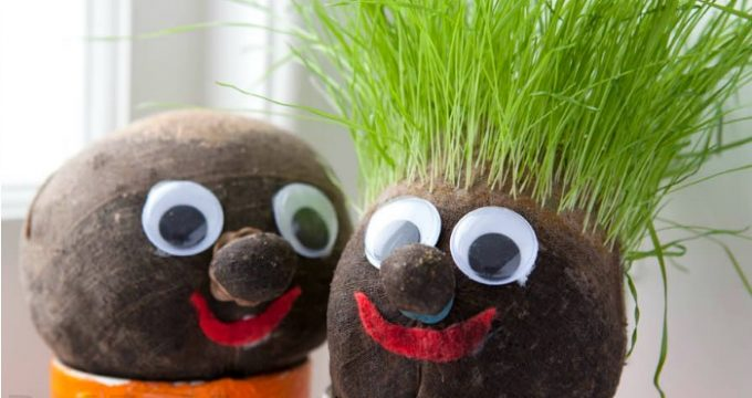 Free Grass Head Lesson Plans for KS1 and KS2 (Printables)
