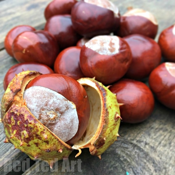 Conker Play Ideas for Forest School Preschoolers. Conker Activities for Forest School