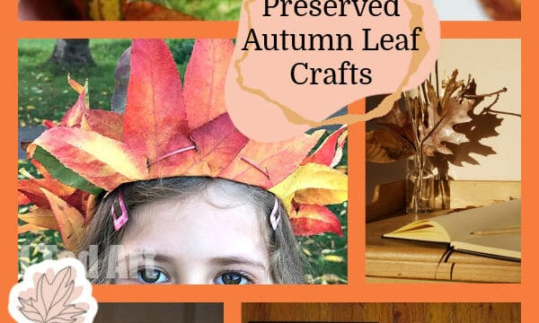 presevered leaves for fall decorating